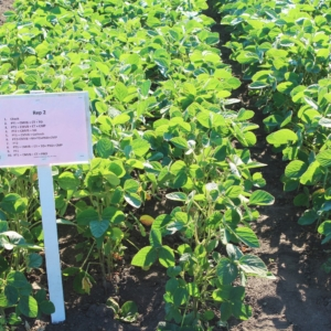 Soybean plot in Northern Alberta