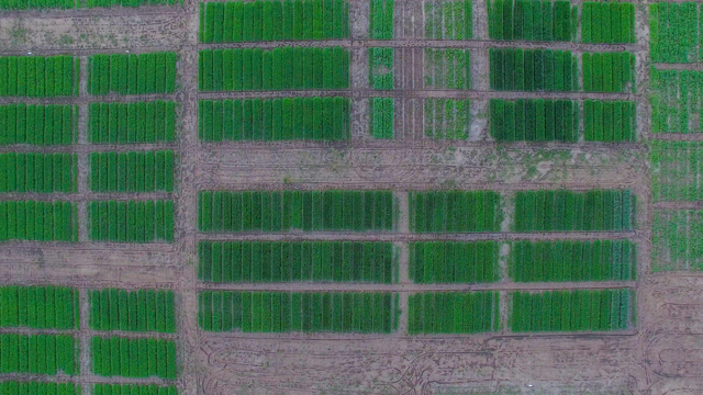 Aerial view of research plots